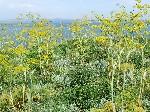Керченский пролив перед мысом Такил