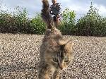 Кошка на военном полигоне